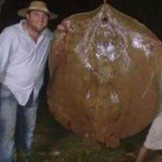 Tres amigos pescaron una raya de 150 kilos