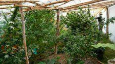 este miercoles el senado tratara el proyecto para autorizar el uso de cannabis medicinal