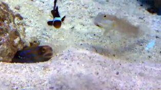 La insólita situación ocurrió en un acuario.