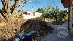 Quince días con las ramas en la vereda