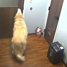 Un perro abre tres puertas para escapar de una veterinaria.