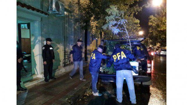 En pleno centro de Concordia secuestraron plantas de marihuana