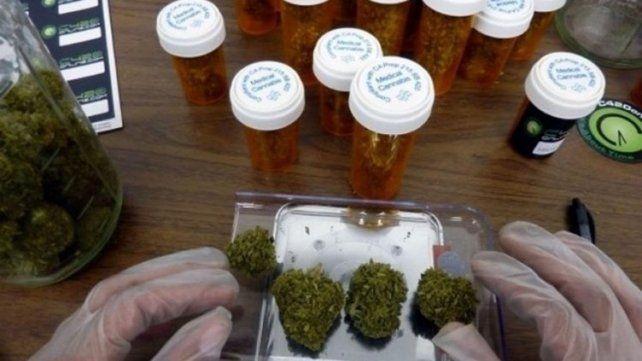 El Poder Ejecutivo promulgó la ley que aprueba el uso medicinal de la planta de cannabis