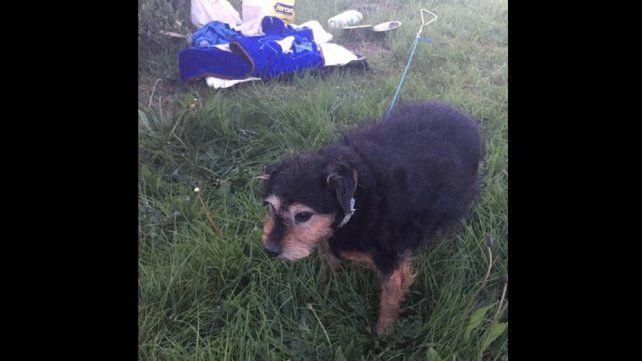 No necesito un perro, la carta encontrada junto a una perrita que había sido abandonada en un descampado