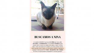Buscan a Nina