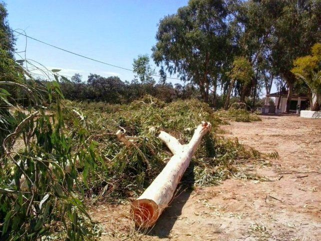 Dos detenidos por talar dos hectáreas de árboles