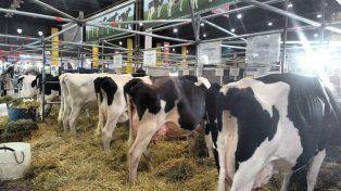 La leche argentina es la segunda más cara del mundo