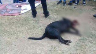 Egresados celebraron que viajarán a Bariloche e hicieron explotar a un perro