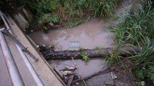 En el arroyo tiraron una palmera. Foto UNO. Juan Ignacio Pereira.