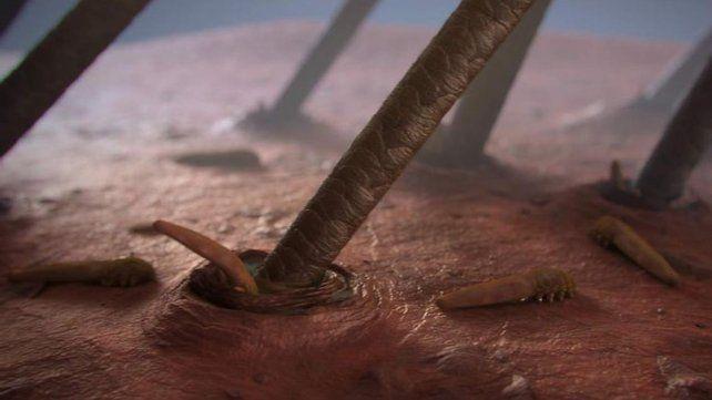 Esta criatura vive en una parte de tu cuerpo