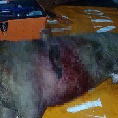 Este jueves apareció un pitbull con un cuchillo clavado en el intercostal izquierdo. Intervino la Policía de Chajarí.