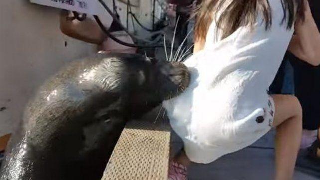 La nena arrastrada por el lobo marino tiene una infección que puede ser mortal