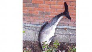 Dos jóvenes bailaron con un delfín muerto y las fotos generaron polémica