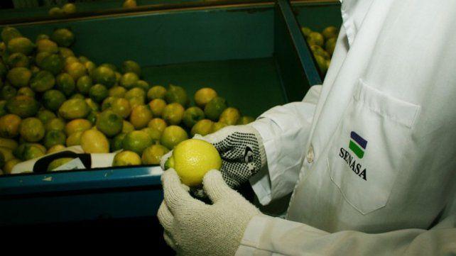 Lo mejor de la citricultura se expondrá en Villa del Rosario