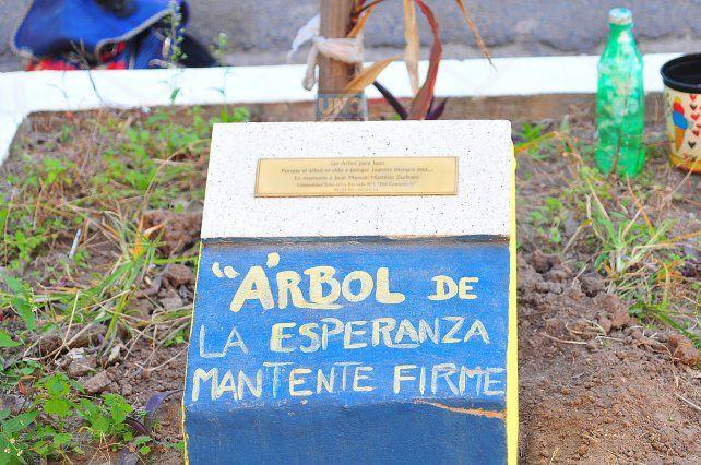 El árbol en la puerta Del Centenario. Foto UNO Juan Manuel Hernández.