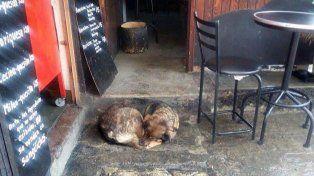 Los clientes se quejaban de un perro que duerme en su puerta y su respuesta sorprendió a todos