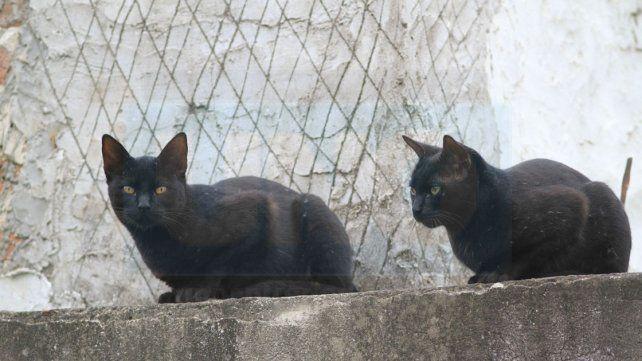 Las víctimas favoritas del criminal son los gatos callejeros