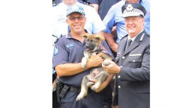 Expulsan a un perro policía por ser tierno y amable con delincuentes