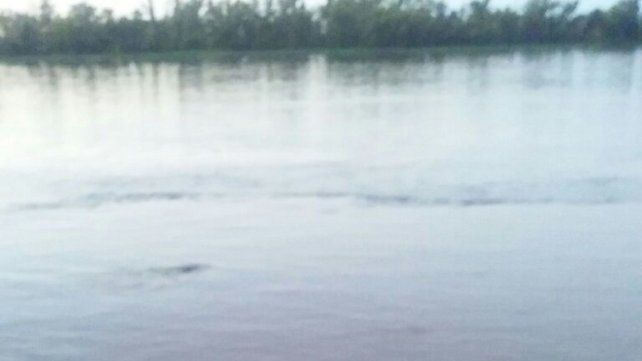 Tecnópolis dejó de ser la atracción y un animal en el río se llevó todas las miradas