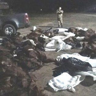 Transportaban casi 500 cueros de carpinchos