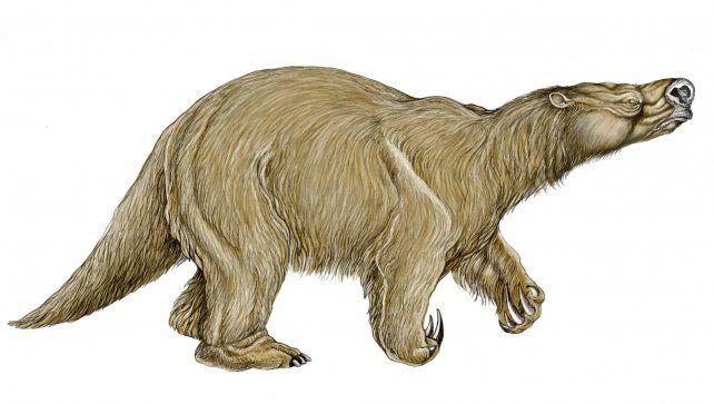 Encuentran restos fósiles de una especie de perezoso hasta ahora desconocida