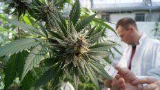 se viene el primer congreso argentino de cannabis y salud en la plata