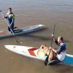 Dos riders que entrenaban en sus tablas de SUP rescataron a un perro que cayó al río