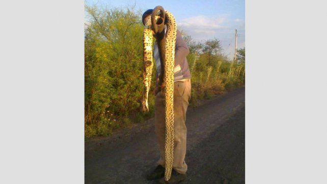 Advierten que, por la creciente, aparecieron víboras de gran tamaño