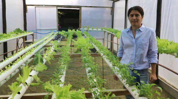 Una paranaense lleva adelante un vivero en donde cultiva plantas sin suelo