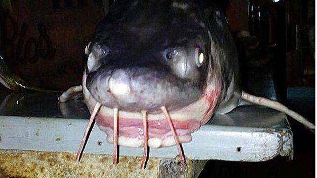 Un pez exótico apareció en las aguas del río Uruguay