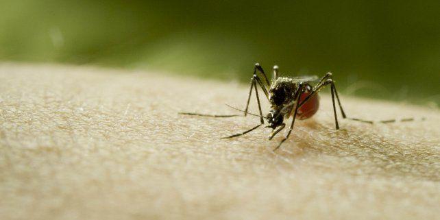 Discovery hace sonar la alarma sobre el riesgo de la próxima pandemia con el estreno global de Mosquito