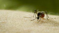 discovery hace sonar la alarma sobre el riesgo de la proxima pandemia con el estreno global de mosquito