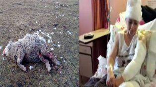 Una jauría de perros arrasa con todo Ushuaia