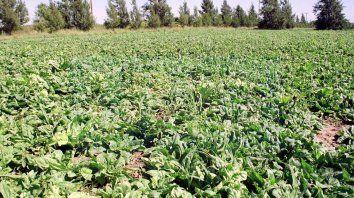 Abastecimiento. Llegan verduras de hoja desde Santa Fe, La Plata, Mar del Plata, Mendoza y Salta.