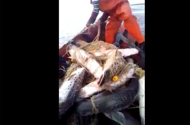 Desopilante pedido a las autoridades que controlan la pesca del surubí en el río Paraná