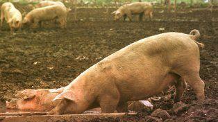 En granjas. Pequeños y medianos productores, están preocupados por el virus desde mayo.