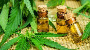 La marihuana para producir aceite de cannabis podría llegar de Uruguay o Canadá