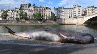 La ballena que sorprendió a todos en París