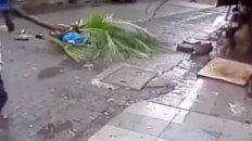 conductora de tv murio aplastada por una palmera