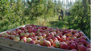 Lopetegui a las economías regionales: Hacen fruta que no pide el mercado
