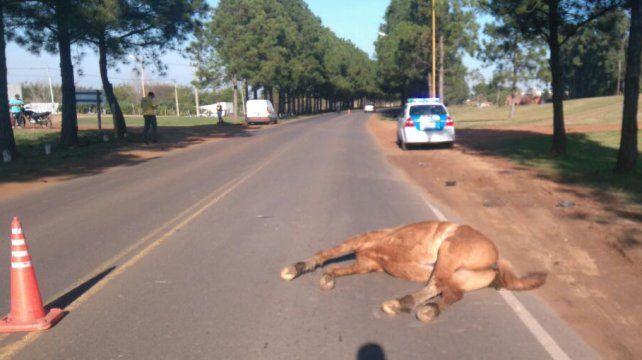 Chocó y mató a un caballo suelto