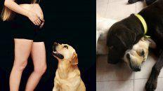si tenes a milo, la busqueda desesperada de un perro entrerriano que conmueve al pais entero
