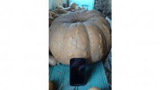 Vecino de Crespo cosechó un zapallo de más de 21 kilos