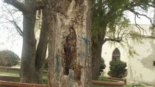 Imagen de la virgen en el árbol.