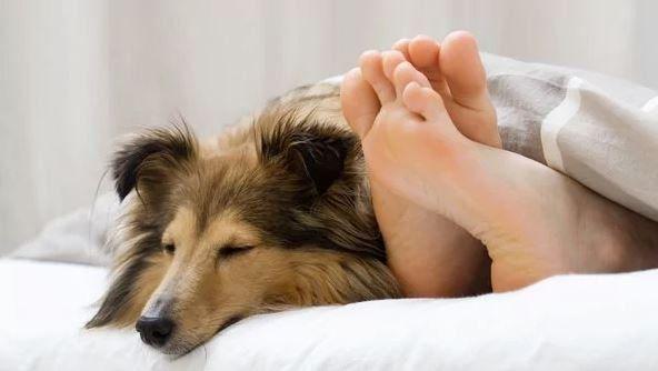 Dormir con la mascota: cuáles son los efectos del colecho canino