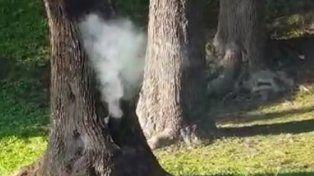Prendieron fuego en el tronco de un árbol