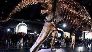 Patagotitan mayorum: el dinosaurio más grande del mundo es argentino