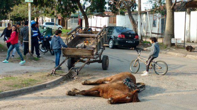 El caballo muerto en La Floresta. Foto Reporte 100.7.