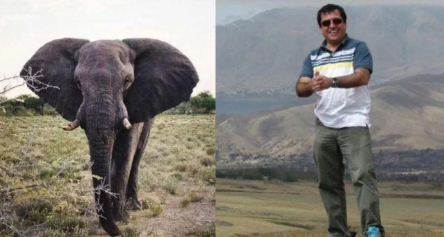 Un argentino murió aplastado por un elefante en África