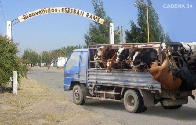 Detuvieron a un intendente de Santa Fe por robar 30 vacas